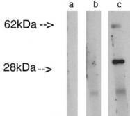 AP05281CP-N - LASS4
