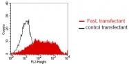 DM1212 - CD178 / Fas Ligand