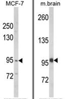 AP18239PU-N - VPS53