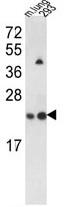 AP17730PU-N - SAR1A