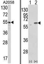 AP17627PU-N - PDIA3