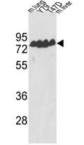 AP17300PU-N - ECE-1
