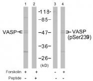 AP02440PU-S - VASP