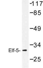 AP06762PU-N - ELF5 / ESE2