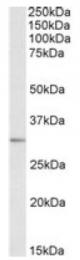 AP10053PU-N - MAPRE3