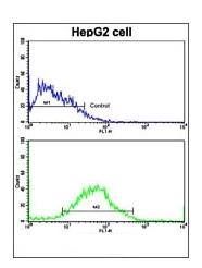 AP14501PU-N - Pumilio 2 / PUM2