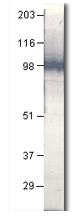 AP10342PU-N - CD283 / TLR3