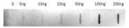 AP10366PU-N - Urocortin-2 (UCN2)