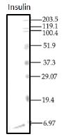 AM12123PU-N - Insulin