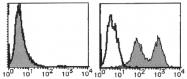 AM20011RP-N - Integrin alpha-7 / ITGA7