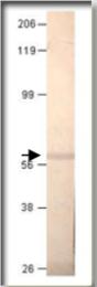 AP10202PU-N - PDE1A7