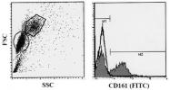 AM20021AF-N - CD161 / KLRB1