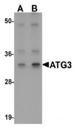 AP20064PU-N - APG3 / ATG3