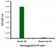 AM20120PU-N - Influenza A H5N1