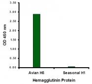 AM20121PU-N - Influenza A H5N1
