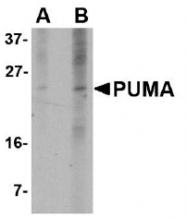AM20126PU-N - PUMA