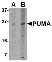AM20127PU-N - PUMA