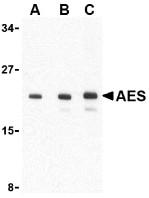 AP30024PU-N - AES / ESP1