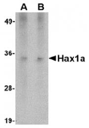 AM20137PU-N - HAX1