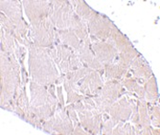 AP30986PU-N - WNT10A