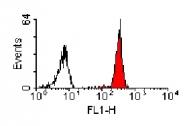 SM1602P - CD147