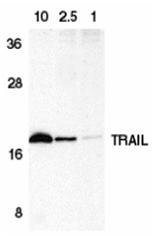 AP30939PU-N - CD253 / TRAIL