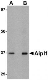 AP30036PU-N - AIPL1