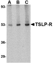 AP30966PU-N - CRLF2