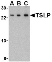 AP30964PU-N - TSLP