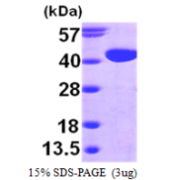 AR09557PU-L - Aldose 1-epimerase