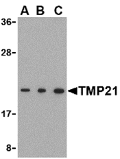 AP30919PU-N - TMED10 / TMP21