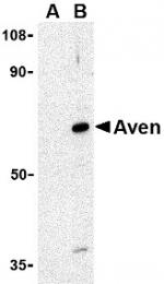 AP30099PU-N - AVEN