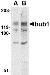 AP30171PU-N - BUB1A
