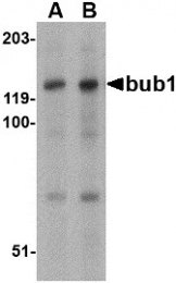 AP30172PU-N - BUB1A