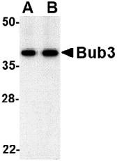 AP30173PU-N - BUB3