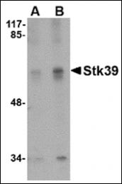 AP30840PU-N - STK39 / SPAK