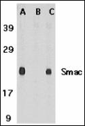 AP30815PU-N - DIABLO / SMAC