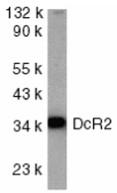 AP30280PU-N - CD264 / TRAILR4