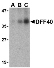 AP30288PU-N - DFFB / CAD