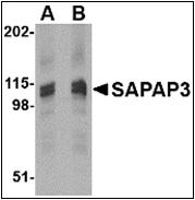 AP30751PU-N - DLGAP3