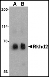 AP30732PU-N - MEX3C / RKHD2