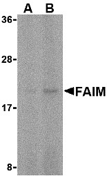 AP30328PU-N - FAIM