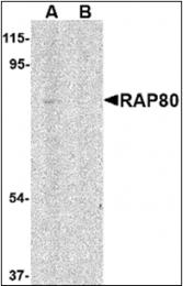 AP30707PU-N - UIMC1 / RAP80