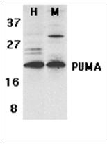 AP30701PU-N - PUMA