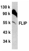AP30340PU-N - CFLAR / Casper / I-FLICE