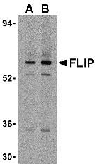 AP30341PU-N - CFLAR / Casper / I-FLICE