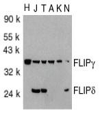 AP30343PU-N - CFLAR / Casper / I-FLICE