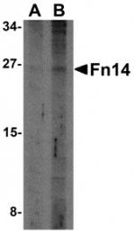 AP30344PU-N - CD266 / TweakR