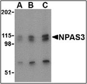 AP30611PU-N - NPAS3 / MOP6