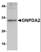 AP30369PU-N - GNPDA2